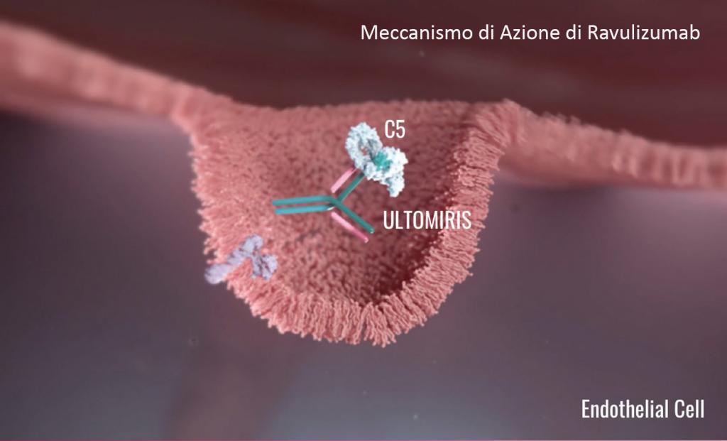 Ravulizumab (ULTOMIRIS®) - Alexion