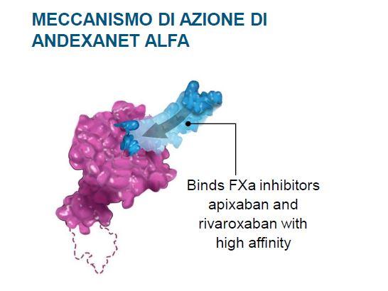 Alezion - andexanet alfa